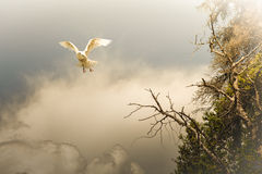 Something from a dream. White bird flying in the clouds with a steep cliff on one side in warm evening light Stock Image