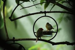 Finches in a Fairyland Garden royalty free stock image
