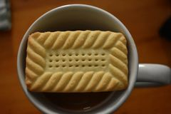Something sweet - morning shortbread and coffee. Shortbread cookie atop a tall mug of coffee, morning time in Kentville NS, Canada royalty free stock image