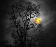 Something Wicked This Way Comes. Moody scene with crows in a bare birch tree in the moonlight created with photographic elements royalty free stock photography