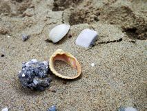 Somewhere on the beach. Shells and stones on the beach, located in Italy Royalty Free Stock Image
