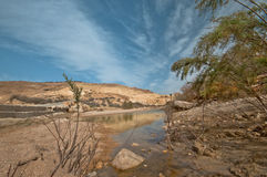 Somewhere in the Desert. In a natural reserve in Israel. Beit Avdat Royalty Free Stock Photo