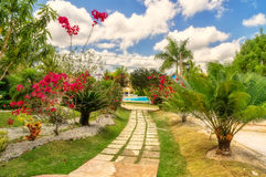 Somewhere in the Dominican. Garden somewhere in the Dominican Republic stock photo