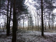 Winter forest. Somewhere far away in the Ukrainian forests royalty free stock photo