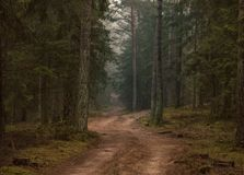 Somewhere in the forest. Road between old trees Stock Photo