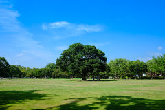 Somewhere in Japan. With a sky and tree Royalty Free Stock Image