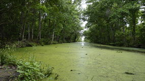 Somewhere in Luisiana. Barataria national reserve in New Orleans stock photo