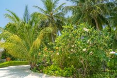 Somewhere in the Maldives. Garden in small island somewhere in the Maldives royalty free stock photo