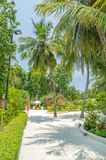 Somewhere in the Maldives. Garden in small island somewhere in the Maldives stock photo