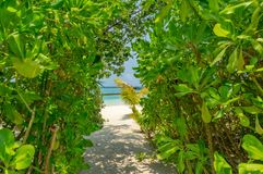 Somewhere in the Maldives. Garden in small island somewhere in the Maldives stock images