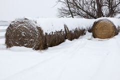Somewhere in Missouri. Hay covered with snow Royalty Free Stock Image