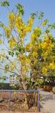 Spring at my doorstep. Somewhere in Mumbai, India Stock Images