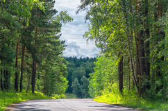Somewhere. Road through the woods somewhere in Siberia Royalty Free Stock Photos