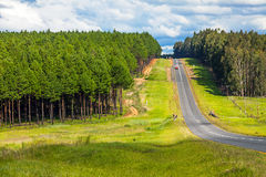 Somewhere in South Africa. Country road through the forest somewhere in South Africa Stock Photography