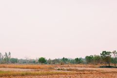 Somewhere in Thailand. Dry plants trees rustic Thailand rainless stock photos