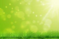 Sommaräng med grönt gräs Arkivbilder