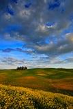 Sommaräng med mörker - blå himmel med vita clousds, Tuscany, Italien Tuscany landskap i sommar Grön äng för sommar med trädet gr Arkivfoton