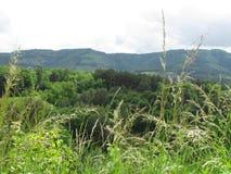 Sommar är härlig i bergen tystnaden av skogen för sommarstormen Arkivfoton