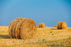 Sommar Autumn Rural Landscape Field Meadow med Hay Bales After Royaltyfria Foton