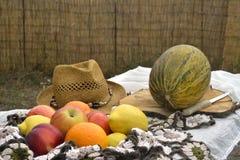 Sommar bär frukt i ett tabellfält Fotografering för Bildbyråer