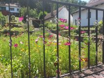 Sommar blommar bak ett staket Royaltyfria Foton