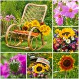 Sommar blommar collage royaltyfria foton