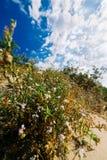 Sommar blommar för alla! Arkivbilder