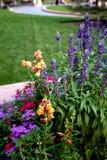 Sommar blommar i parkera royaltyfri bild