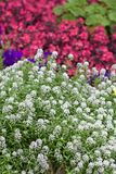 Sommar blommar i röjningen Arkivfoto
