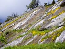 Sommar blommar i Yellowstone stormig sommar Fotografering för Bildbyråer