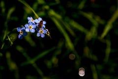 Sommar blommar på en mystisk äng Royaltyfri Fotografi