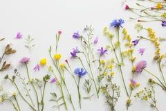 Sommar blommar på vitbokbakgrund royaltyfria foton
