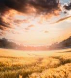 Sommar- eller höstkornfält med härlig molnhimmel på solnedgången, suddig utomhus- natur Arkivbild
