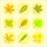Sommar- eller höstsidasymboler Arkivbilder