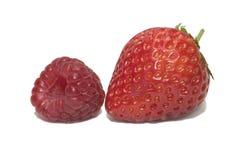 sommar för 4 frukt Arkivbild
