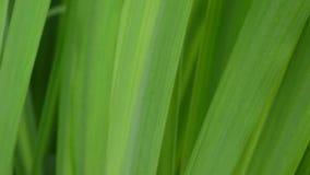 Sommar för bakgrund för makro för grönt gräs härlig Kamera för statisk elektricitet för HD-videomaterial 1920x1080 lager videofilmer