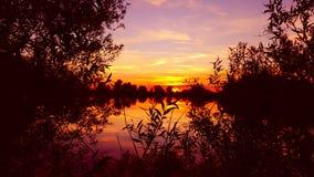 sommar för blom- natt för bakgrundsdesign din seamless Royaltyfria Foton