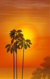 sommar för blom- natt för bakgrundsdesign din seamless Palmträd på bakgrunden av Arkivfoto