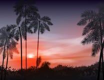 sommar för blom- natt för bakgrundsdesign din seamless Palmträd på bakgrunden av Arkivfoton