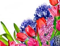 sommar för fjäder för begreppsblommahyacint romantisk Tulpan Arkivfoton