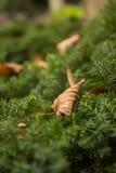 Sommar för grön färg lämnar träd Arkivfoto