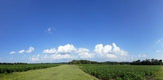 sommar för panorama för oklarhetsfält grön Royaltyfri Foto