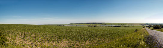 Sommar för panorama för havrefält Fotografering för Bildbyråer