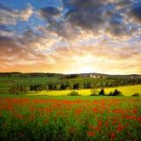 sommar för red för vallmo för färgfält indisk Royaltyfria Foton