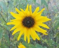 sommar för sally för blomma blomma för dagfältfireweed lantlig fotografering för bildbyråer