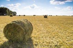 sommar för sugrör för äng för hö för balbalfält Arkivbild