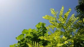 sommar för upplösning för bakgrundssammansättning god grön hög panorama- arkivfoton