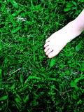sommar för växt för bakgrundsblurgräs ett Royaltyfria Bilder