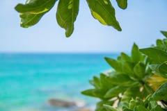 sommar f?r sn?ckskal f?r sand f?r bakgrundsbegreppsram tropisk sommar f?r bakgrundsferieaffisch Resa och s?tta p? land semestern, royaltyfri fotografi