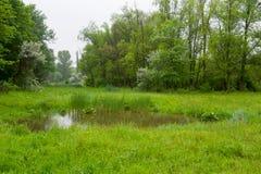 Sommar Forest Landscape Arkivbilder